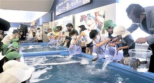 7月7日のオープンを前に、店内水槽にイサキとマハタを投入する園児ら=7月6日、福井県高浜町塩土の「うみから」