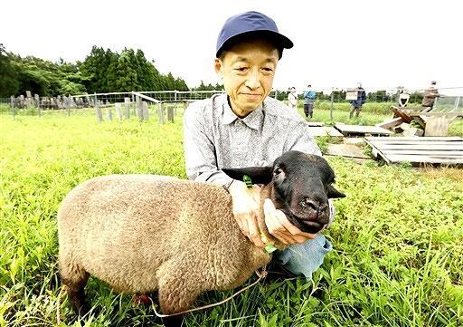 牧場に到着したヒツジと男性=7月6日、福井県福井市西畑町