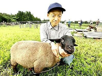 耕作放棄地にヒツジ放牧 除草、食肉にメェ~案 福井市の牧場経営の男性