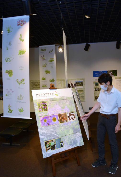 高山植物の細密画の展示もある企画展