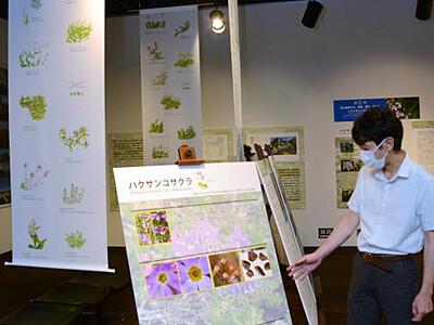 北アの植物、不思議感じて 大町山岳博物館70周年記念展