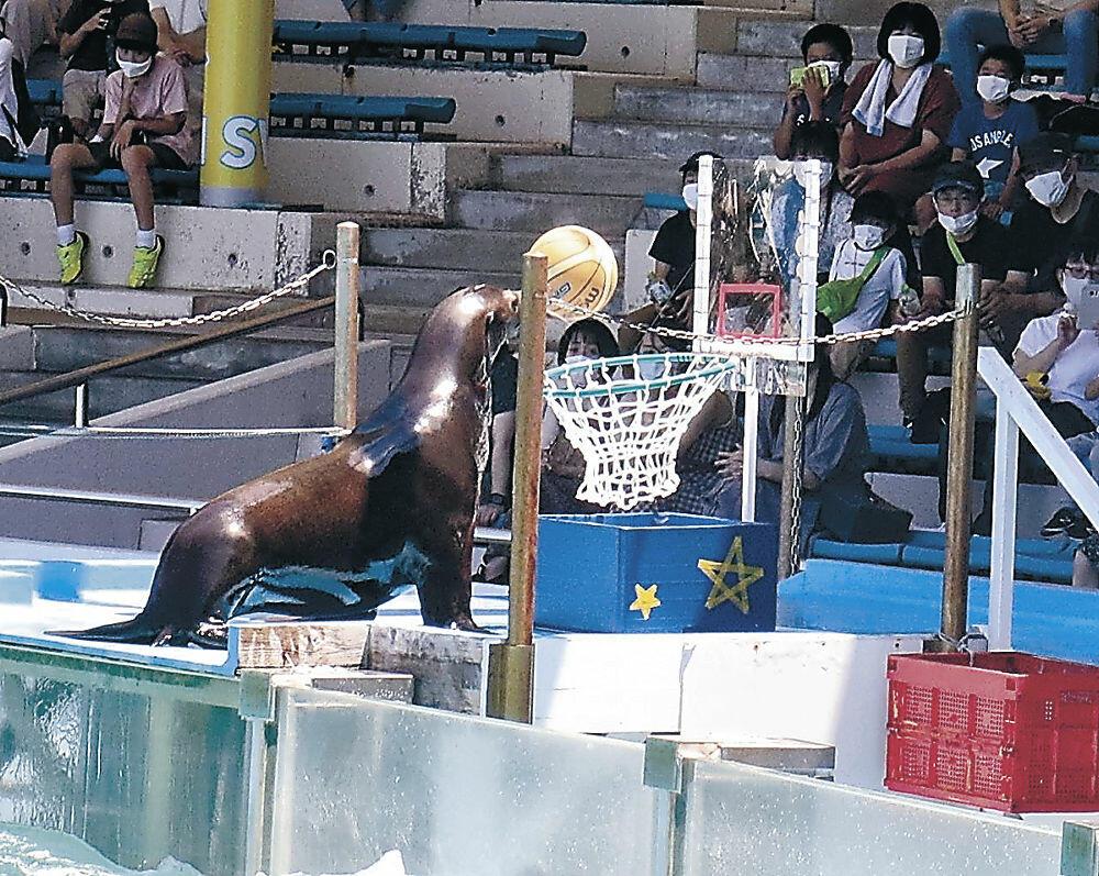 バスケットボールでシュートするアシカ=七尾市ののとじま臨海公園水族館