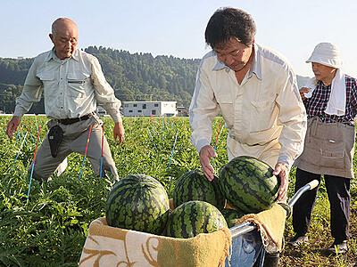甘~い「朝日すいか」ぜひ食べて 富山・婦中で収穫