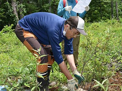 持続可能な「植樹ツアー」原村から発信へ 村有林にレンゲツツジ