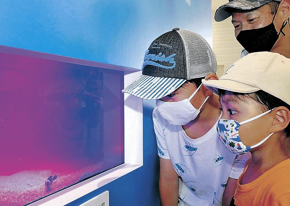 クマノミを観賞する家族連れ=金沢港クルーズターミナル
