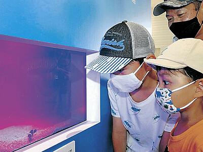 クマノミ、スズメダイ 近海の魚見た! クルーズターミナル展示