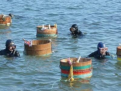ウニ漁、海女たちが精 高級珍味として各地に出荷へ