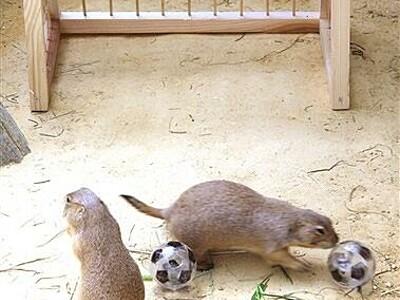 五輪に負けるな!動物も獣舎でナイスプレー 足羽山公園