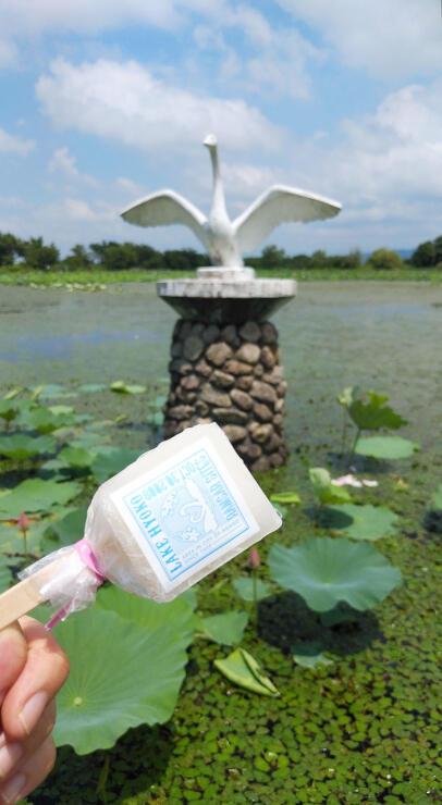 スワンポップを入れた投稿写真イメージ。周りにはちらほら本物の白鳥の姿も=阿賀野市水原
