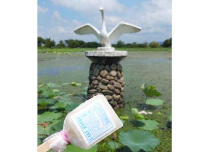 アイス片手に「白鳥スポット」探索 阿賀野 瓢湖