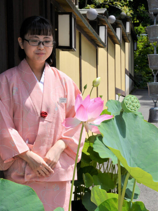 上田市別所温泉の旅館などで一斉に飾っているハスの花