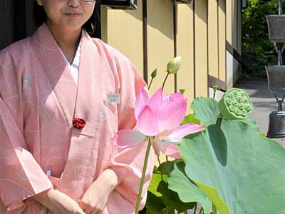 ハスの花でおもてなし 上田・別所温泉、一斉に飾り付け