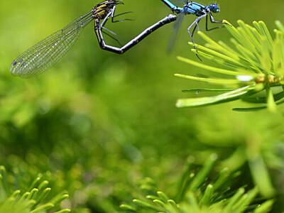 高原の水辺、育む愛の形は 北八ケ岳・白駒池