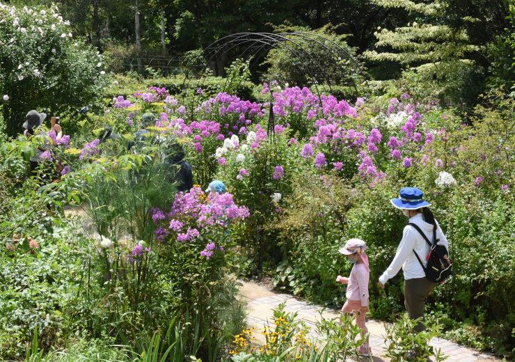 フロックスなど夏の花々が見頃を迎えた園内