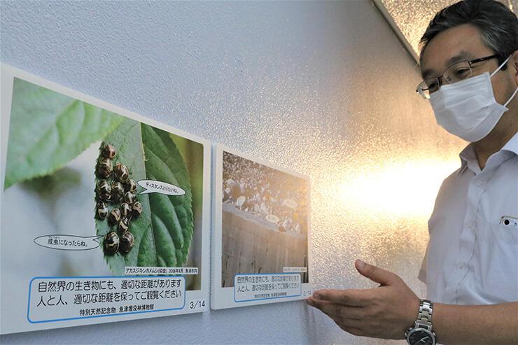 「密」状態のカメムシ(左)などパネルを紹介する石須館長