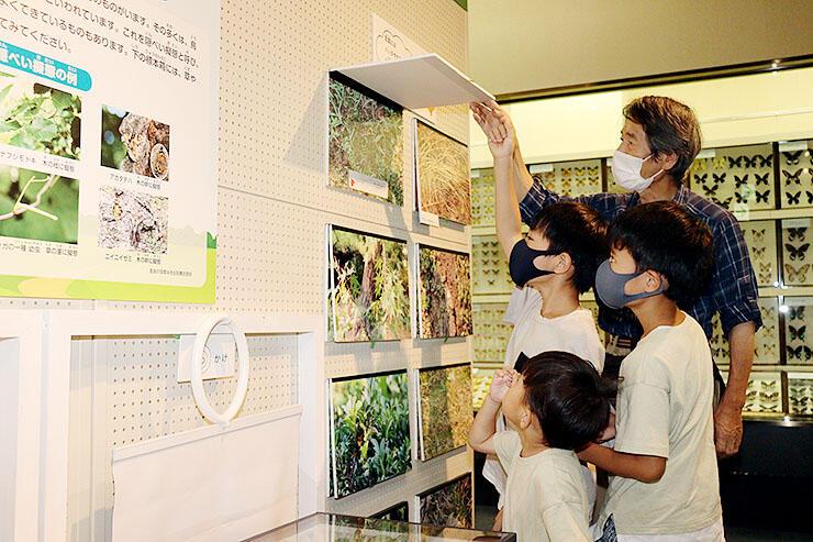 体験コーナーで草に擬態した昆虫を探す子どもたち=富山市科学博物館