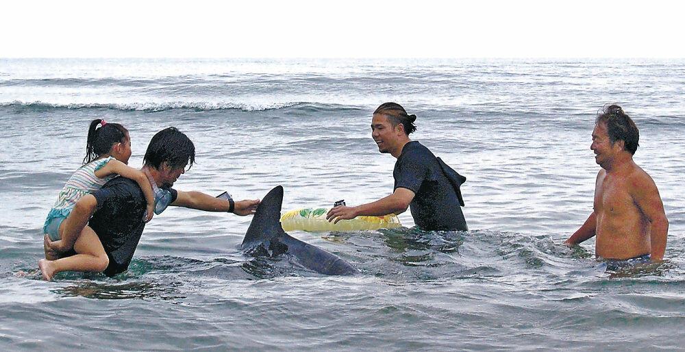 近寄ってきたイルカと戯れるサーファーや親子=羽咋市柴垣海岸