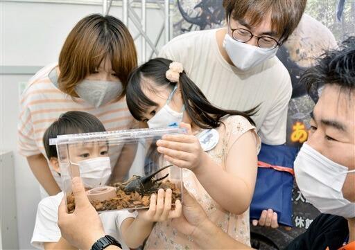 1万人目の記念品に贈られたヘラクレスオオカブトに興味津々の親子=8月21日、福井県福井市自然史博物館
