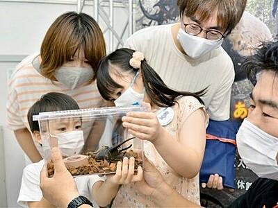 福井市自然史博物館のカブトムシ、クワガタ展が異例の人気 来場者1万人目にヘラクレスオオカブト贈る