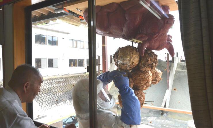 塩沢さんが見守る中、蜂の巣を取り付けていく社員