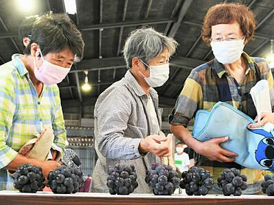今季のブドウ 色づき良好 松本・塩尻で「目揃会」