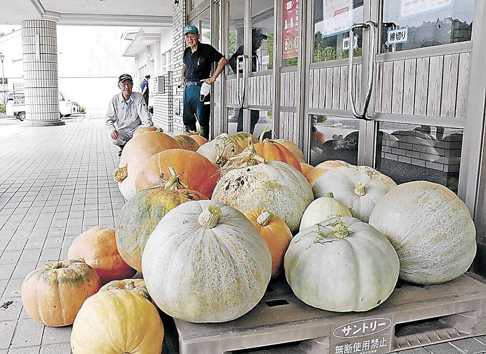 収穫された巨大カボチャ=七尾市高階地区コミュニティセンター