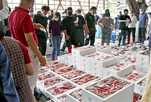 新鮮なノドグロなどが並んだ底引き網漁の初競り=9月2日、福井県越前町大樟の同町漁協荷さばき所