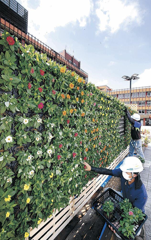 色とりどりのジニアが植えられた立体花壇=金沢市役所庁舎前広場