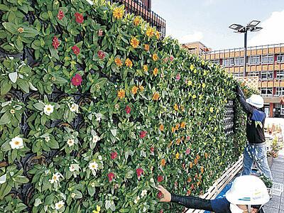 金沢市庁舎前に秋の彩り 立体花壇、800株植える