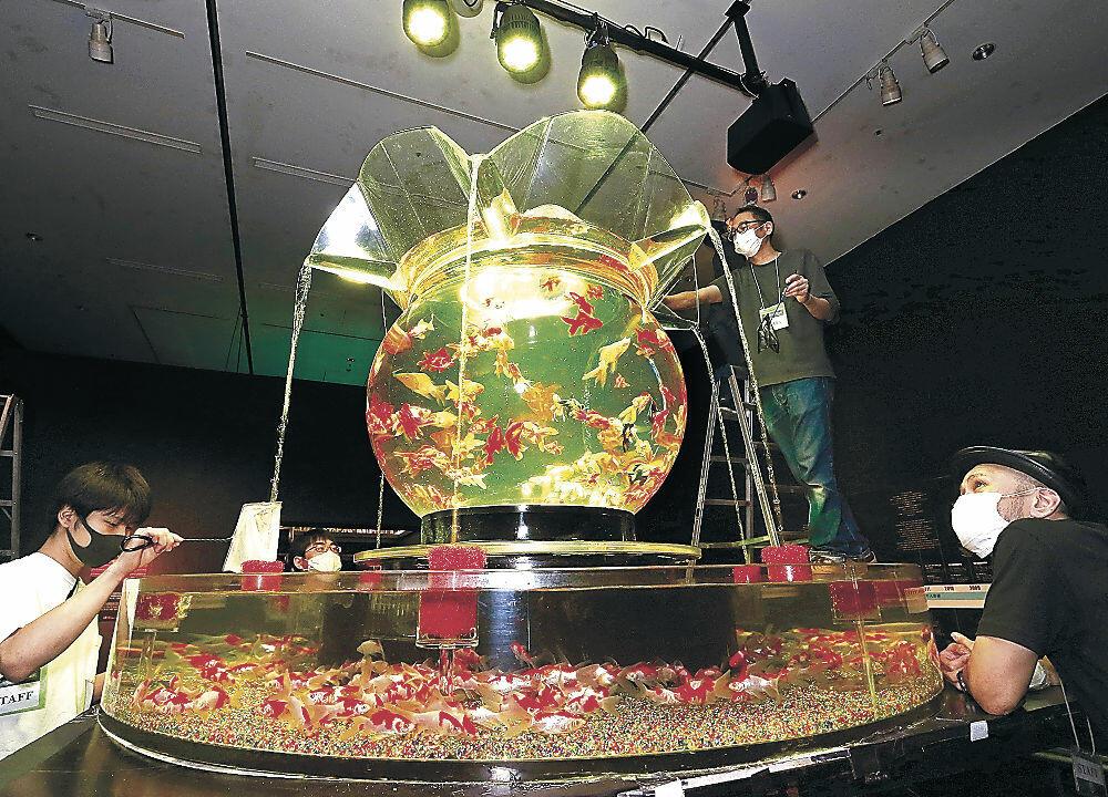 あでやかに金魚が泳ぐ巨大水槽=金沢21世紀美術館