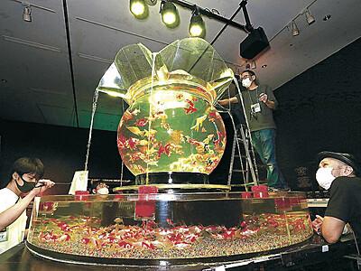 金沢の秋、金魚乱舞 金沢21美でアートアクアリウム展が17日開幕