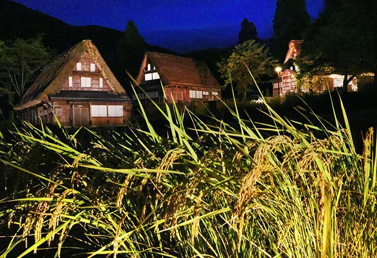 実りの秋を迎える中、ライトアップされる合掌造り家屋=南砺市相倉