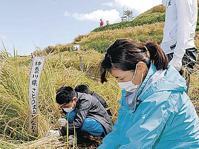 オーナー稲刈り自然に感謝 輪島・千枚田 県内外の140人参加