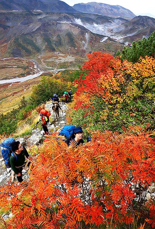 登山者の目を楽しませるナナカマドやミネカエデの紅葉=雷鳥沢