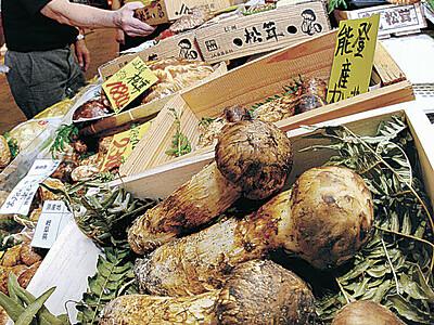 県産マツタケ並ぶ 近江町市場