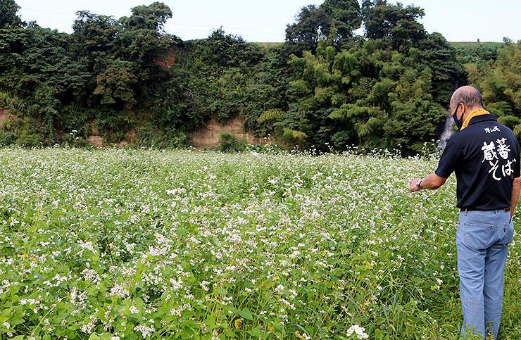 白い花が一面に咲くソバ畑