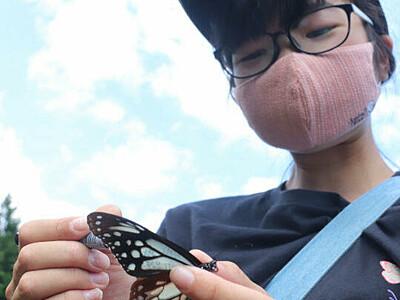 アサギマダラ 元気に飛んで 宮田でマーキングや撮影体験