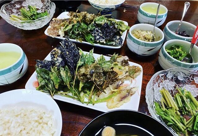 アーシングツアーで収穫した山菜や野草を自ら調理した料理=福井県池田町