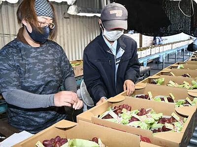 クイーンルージュ、露地物も「良い出来」 中野市農協が出荷開始