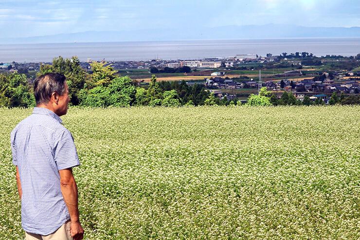白い花が見頃を迎えている黒部市阿古屋野地区のそば畑