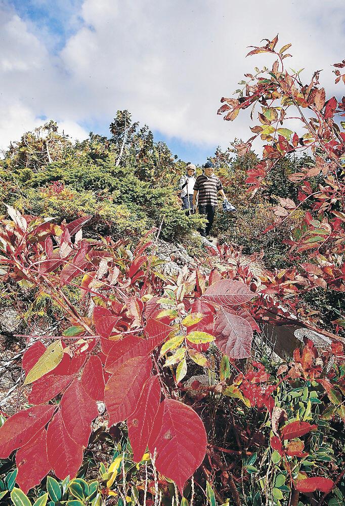 紅葉が始まった三方岩岳の登山道