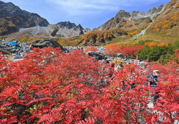 紅葉が最盛期を迎え、真っ赤に色づいたナナカマドが彩る北ア涸沢カール=5日午前11時41分、松本市安曇