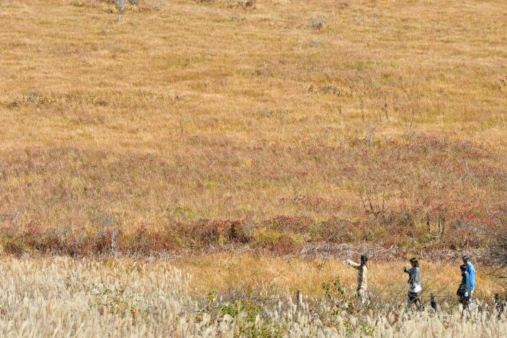 一面の草紅葉となった八島ケ原湿原=11日