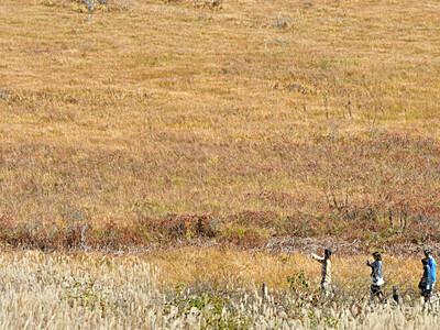 一面に広がる黄金色 八島ケ原湿原「草紅葉」