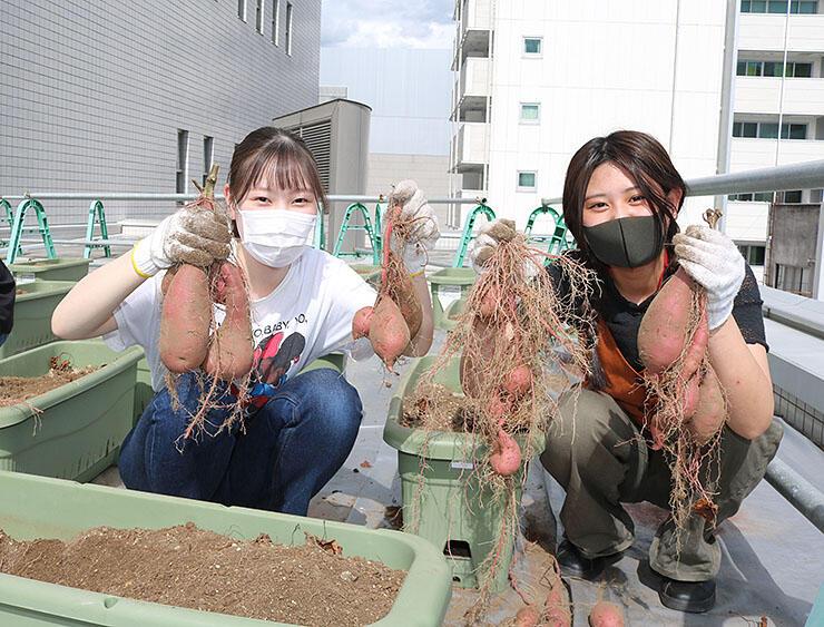 市民プラザの屋上で育ったサツマイモを収穫し笑顔の生徒