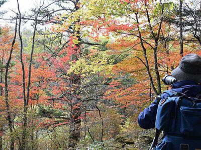 清流の音、包む秋 佐久穂の八千穂高原自然園