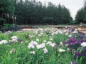 坂井市海浜自然公園